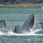 Pocket Cruiser – Discovering SE Alaska, Part II
