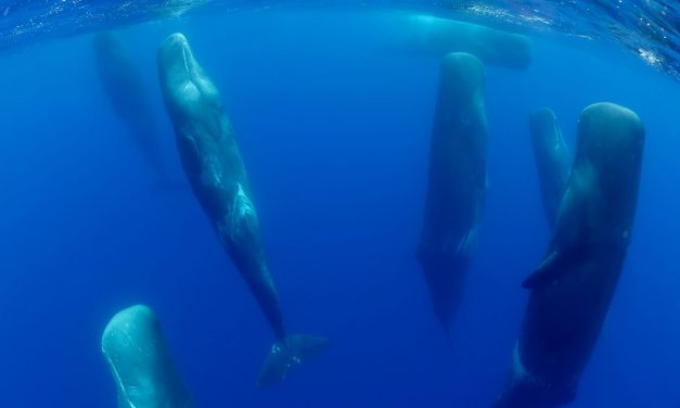 How Do Whales and Dolphins Sleep?